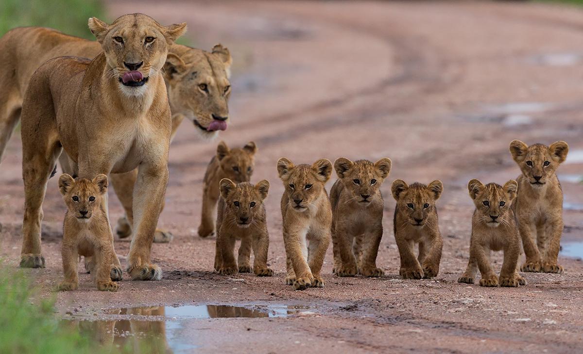 Safaris en 4x4 dans les parcs nationaux 2020