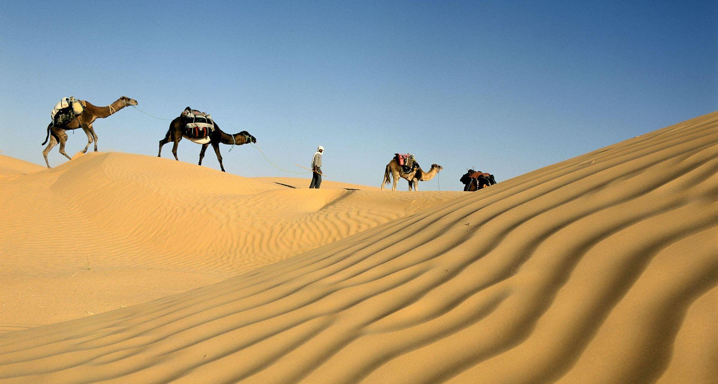 De Tozeur à Djerba