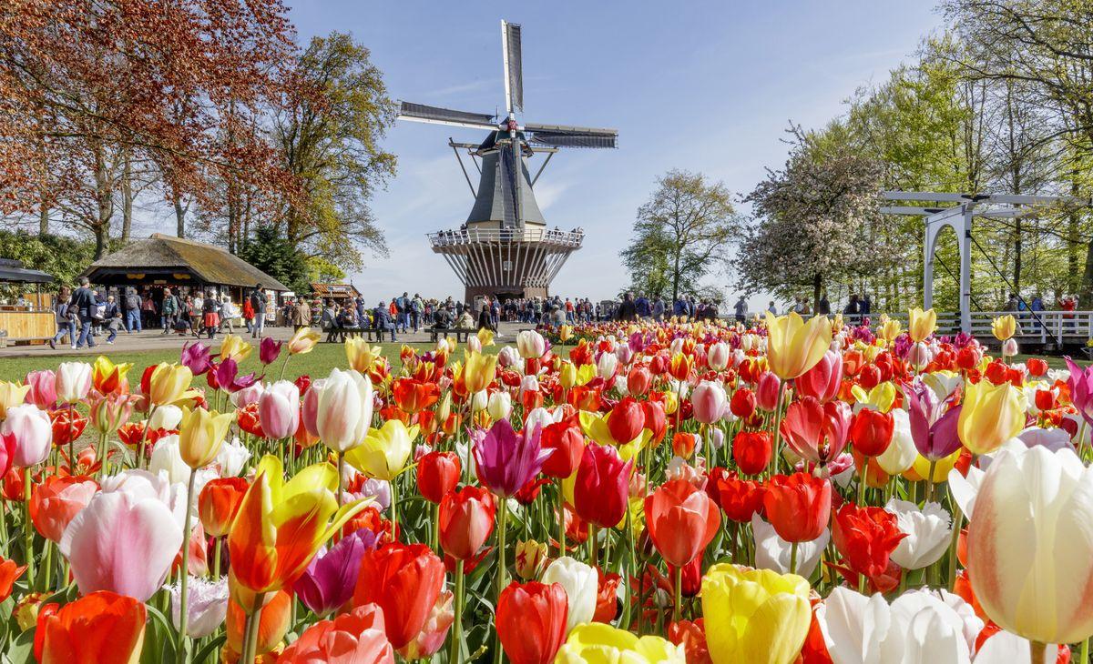 La Hollande, pays des tulipes