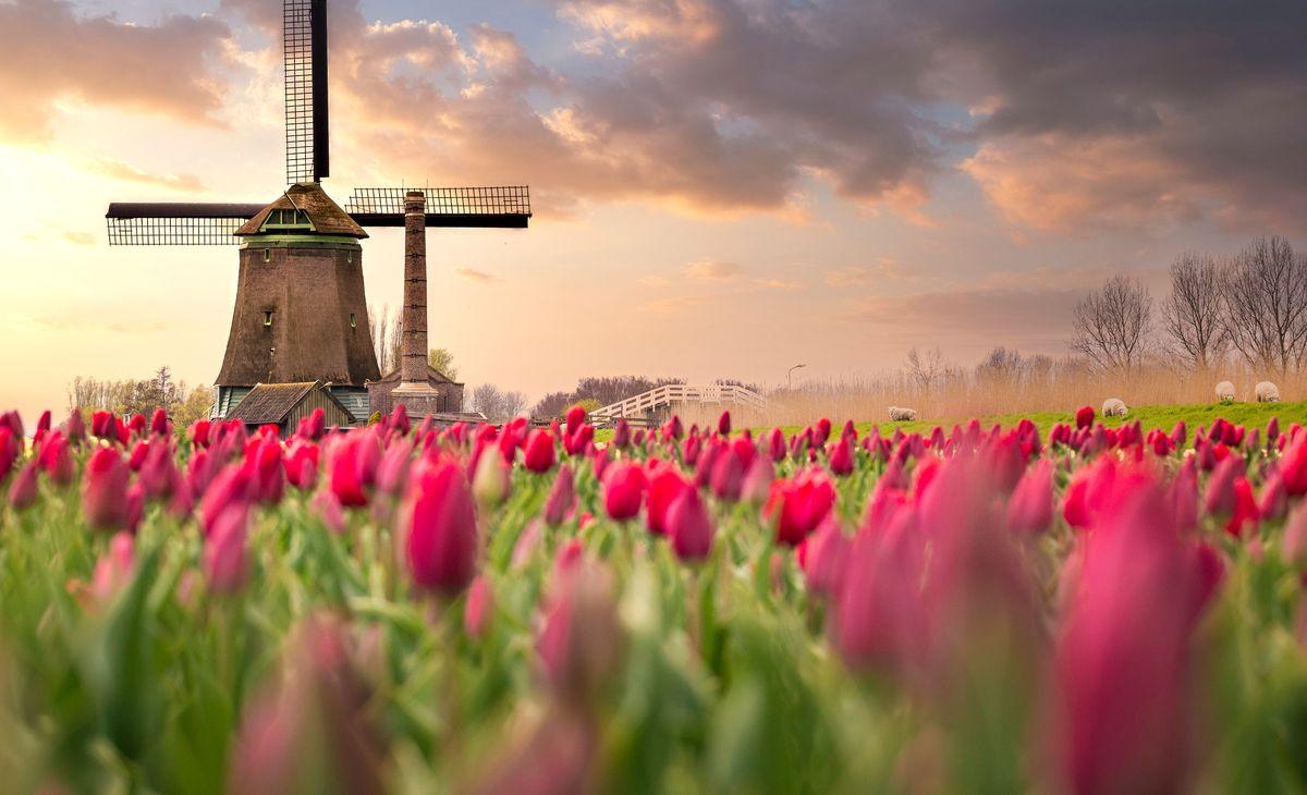 LA HOLLANDE et Bruges, région Sud-Ouest