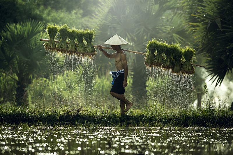 Les Splendeurs d'Indochine