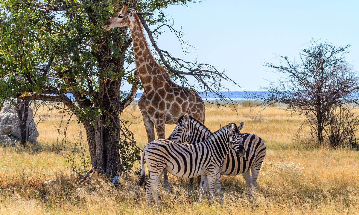 Le meilleur de la Namibie & Extension Fish River Canyon et Desert du Kalahari
