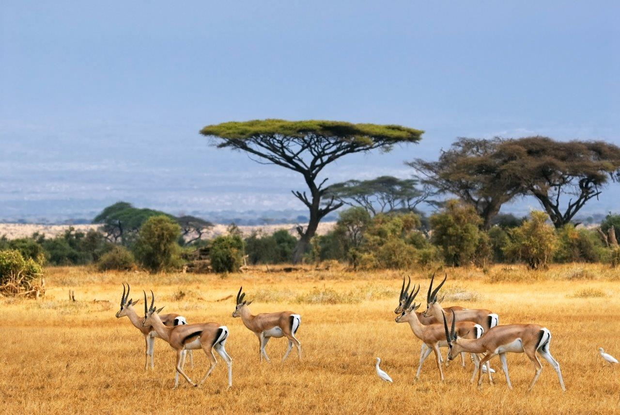 Les pistes du Kenya en 4x4