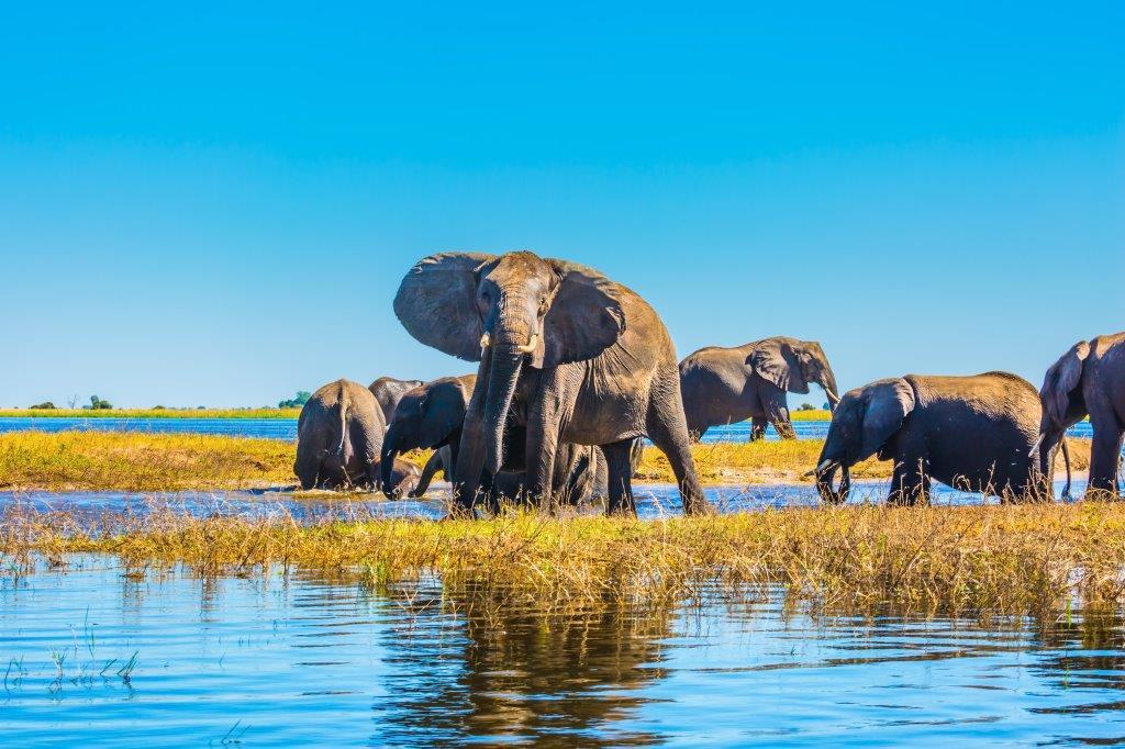 Circuit - Zimbabwe et Botswana - Des chutes Victoria au Delta de l'Okavango